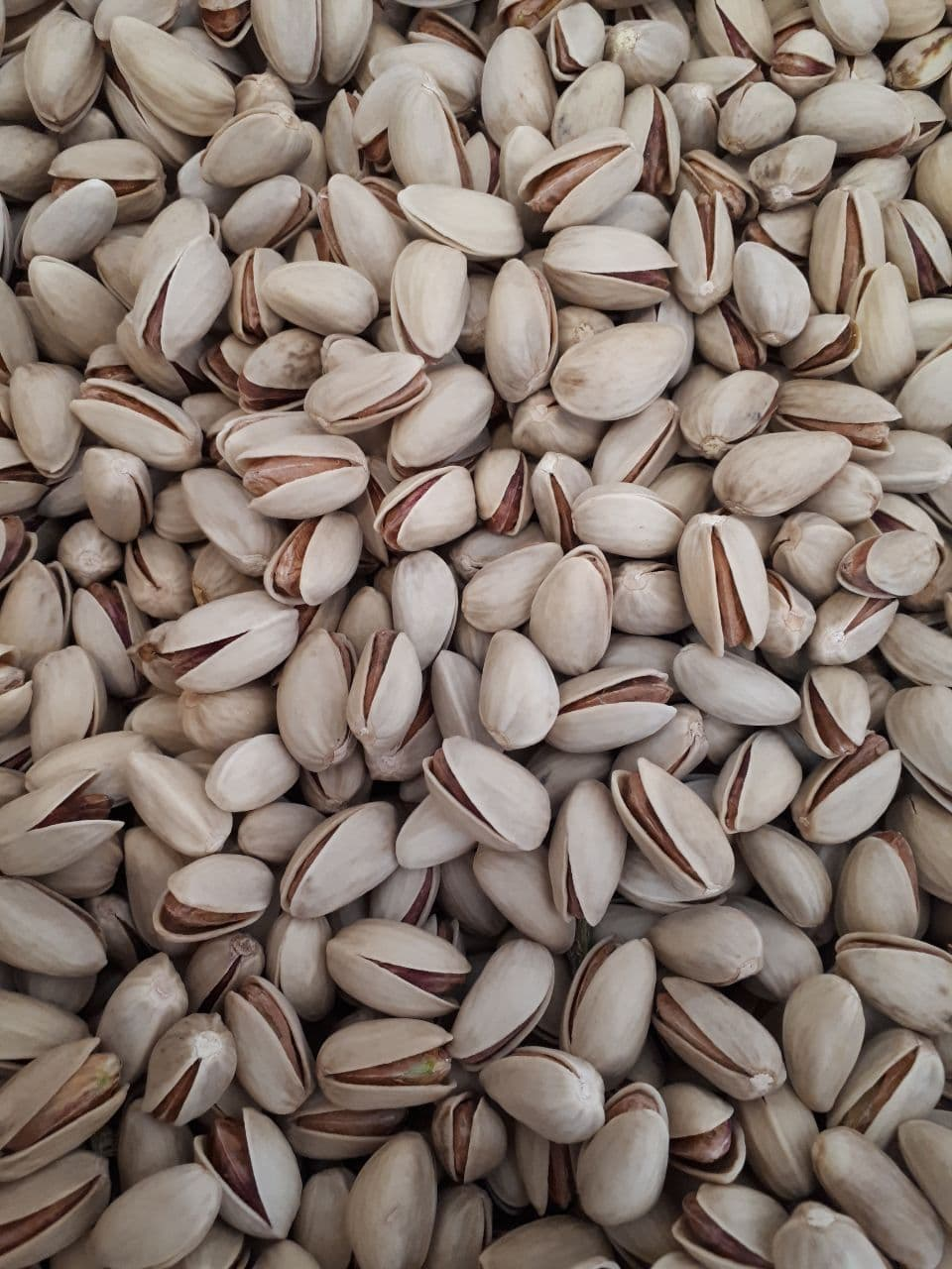 Sale of Iranian pistachio tonnage, Akbari model, size 24, white and without stains